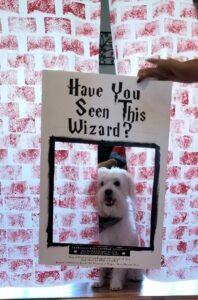 Have you seen this wizard DIY photoboard